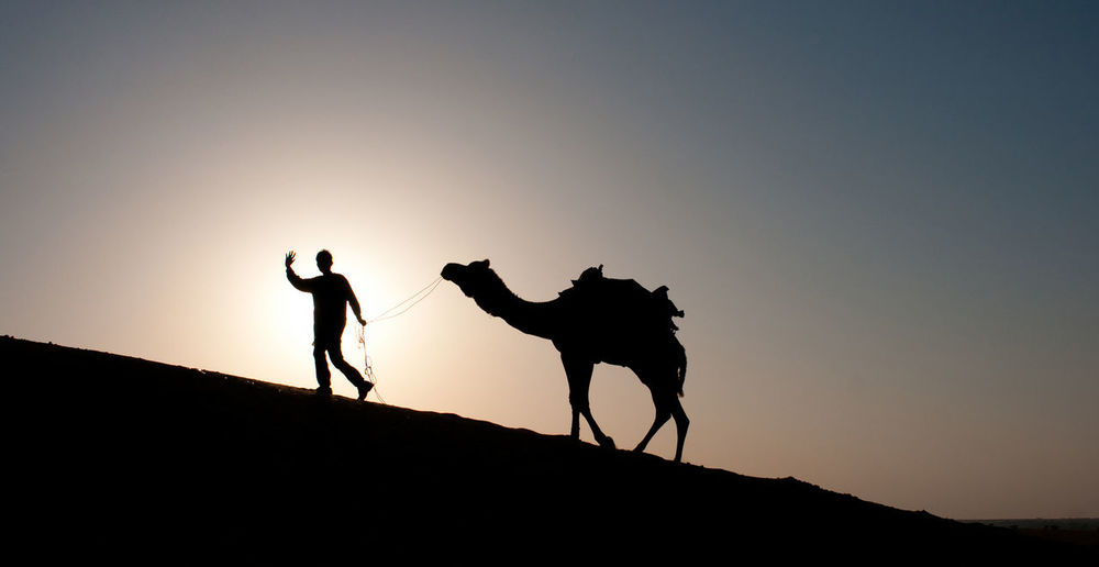 Side view of silhouette herder with camel