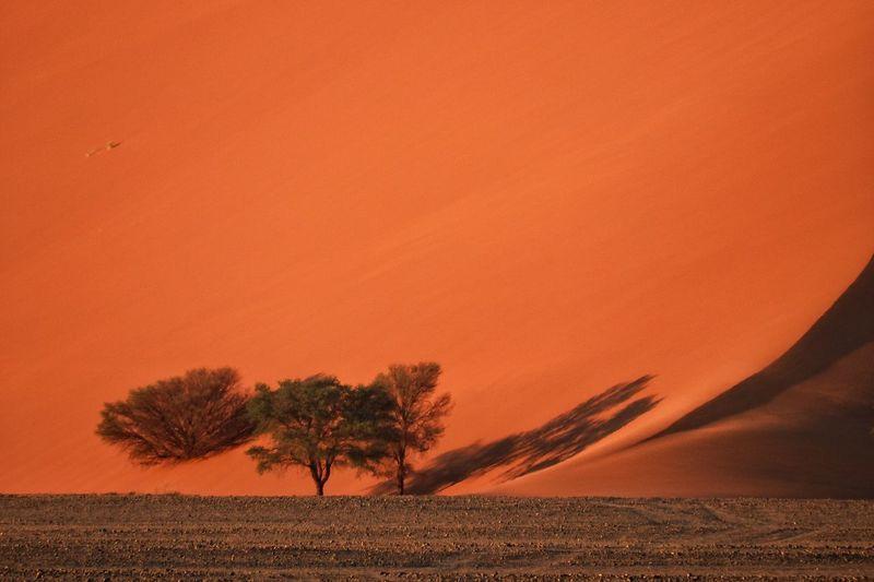 Full view of orange dune at sunset in desert
