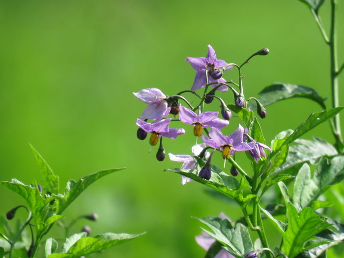 Plants Animals In The Wild Bird With Flowers Flower Flowering Plant Nature Plant Purple