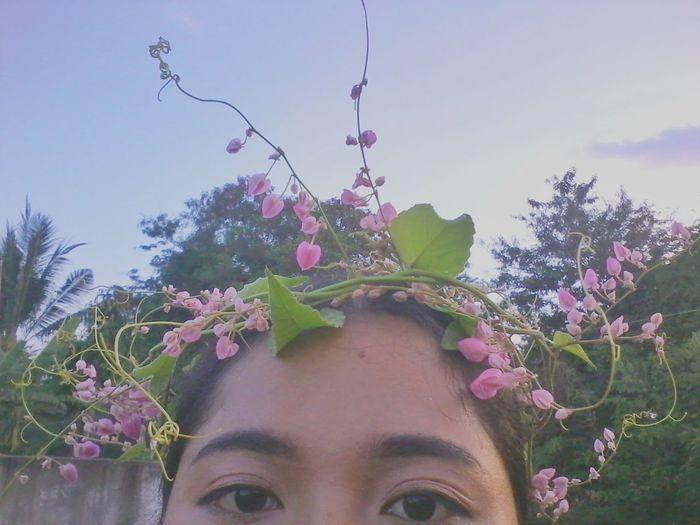 มงกุฏดอกไม้ Headshot Blue Sky Tree Flowers Sky