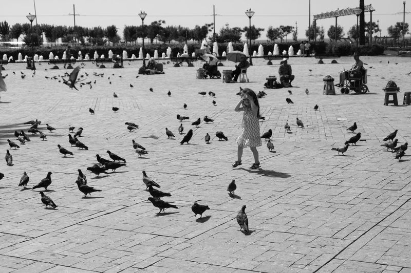 Full length of girl standing amidst birds on pedestrian walkway in city during sunny day