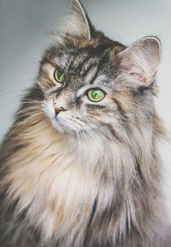 Lovely cat ❤