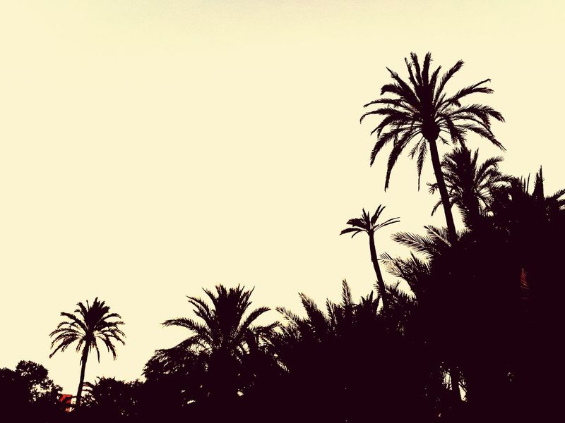 Palm Trees Palm Grove Garden Garden Photography Palm Tree Sunset Sunset_collection Landscape Landscape_Collection EyeEm Best Shots EyeEm EyeEm Landscape Eyeem Landscapes Eyeem Garden Taking Photos Check This Out Hello World Enjoying Life Quiet Moments Quiet Afternoon Quiet Beauty Nature Photography EyeEm Nature Lover EyeEm Gallery EyeEm Masterclass