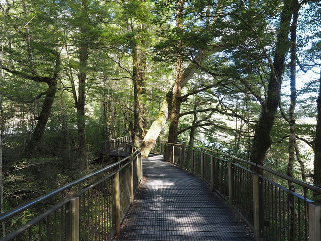 New Zealand Scenery Beauty In Nature Footbridge Forest Milford Road Mirror Lake Nature Railing The Way Forward Tree