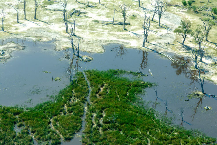 EyeEm Nature Lover Trees WoodLand Aerial Photography Aerial View Beauty In Nature Day Flood Green Color Growth High Angle View Lake Nature No People Okavango Delta Outdoors Plant Reflection Tranquility Tree Underwater Water Wilderness The Great Outdoors - 2019 EyeEm Awards