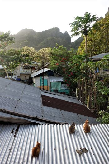 Built Structure Cats El Nido Mountain Palawan Philippines Rooftops Rual Tin Roof Travel Village