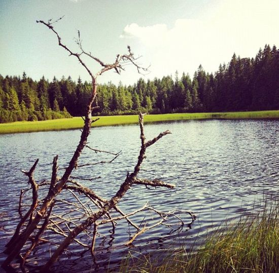 Blacklake Water Nature Tree Tranquil Scene Lake Sky Tranquility No People Scenics Outdoors Beauty In Nature Growth Day Dead Tree Wetland Branch