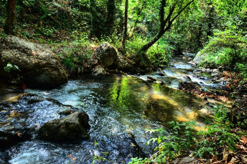Forest Stream Water Scenics WoodLand Tranquil Scene Tranquility Beauty In Nature Non-urban Scene Flowing Tree River Travel Destinations