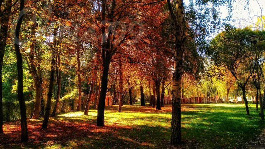 Tree Outdoors Day No People Grass Nature Growth Sky Beauty In Nature Autumn Colours Nature Gold Colored Rainbow Colors Romantic Landscape Morning View Morning Colours Flower Autumn Leaves Grass