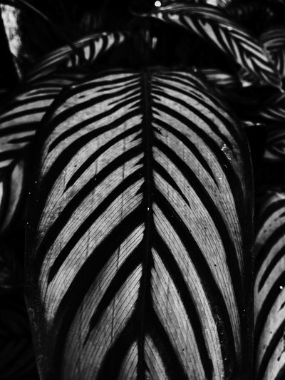 Close-up No People Pattern Indoors  Full Frame Backgrounds Publication Book Still Life Nature Focus On Foreground Striped Day Textured  Leaf Design Art And Craft Creativity Natural Pattern