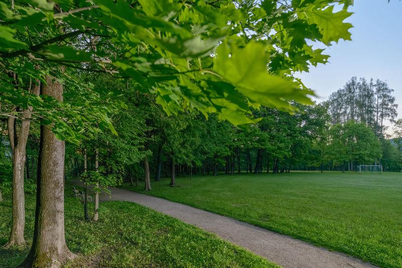 morning path in