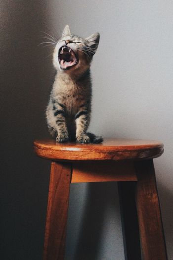 Kitten Sitting On Wooden Table By Wall