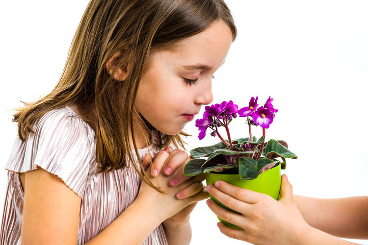 Little girl smelling viola flowers in green pot. Child is smelling flowers given as a gift or present. Profile view, studio shot, isolated on white background. Indoors  One Person Girl Child Little Children Dress Hair Flower Flower Head Potted Plant Pot Portrait Viola Viola Flowers Violet Violet Flowers Plant Violaceae Looking Holding Green Smelling Smelling The Flowers Expression Emotion Face White White Background Isolated Emotions Hands Flowering Plant Girls Childhood Lifestyles Headshot Freshness Purple