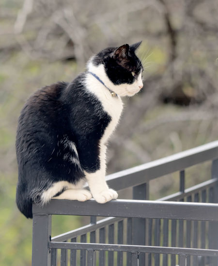 Animal Themes Close-up Day Domestic Animals Domestic Cat Feline Focus On Foreground Full Length Mammal Nature No People One Animal Outdoors Pets Railing Sitting