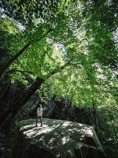 Man standing by tree in forest