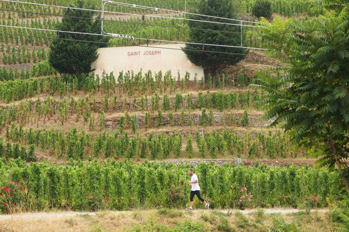 Jogging Saint Joseph Wine Country