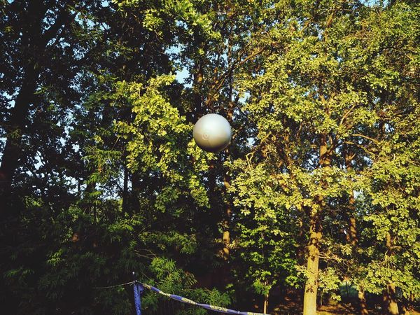 Ball Big Ball Volleyball Silver Ball Ball In The Air Ball Up Sports Forest Forest Trees The Week On EyeEm EyeEmNewHere Volleyball - Sport Lifestyle Freedom Healthy Lifestyle Perspectives On Nature