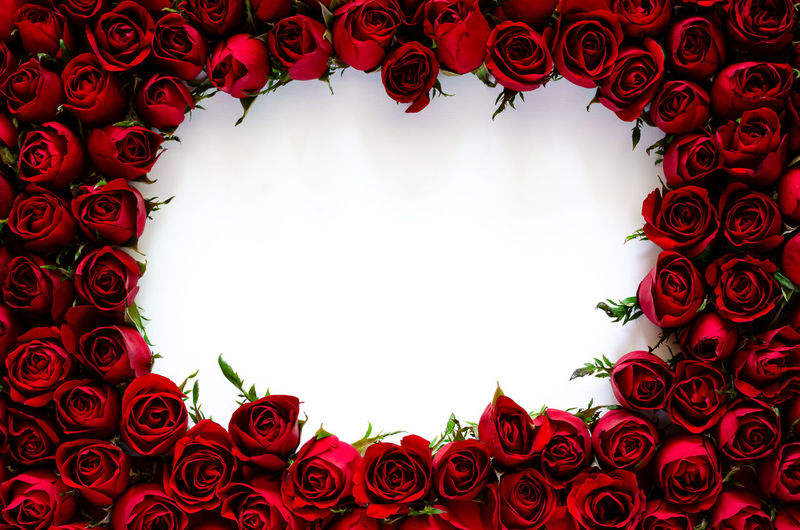 Directly below shot of red roses against white background