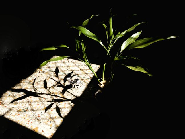 my valentine... Mobilephotography Room Decor Room Plant Camel Light And Shadow Black Background No People Leaf Night Plant Nature Close-up