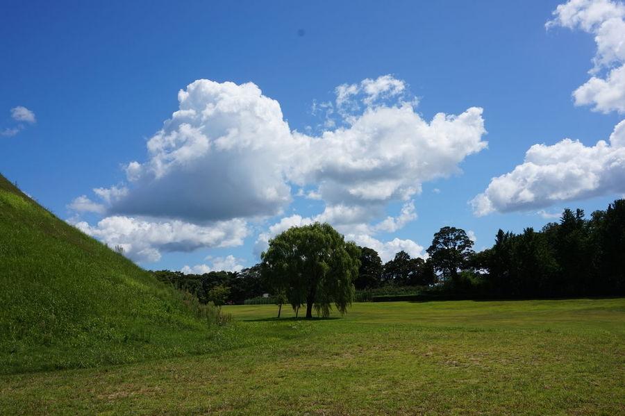 Gyeongju Korea Korean Travel Traveling Trip Beauty In Nature Blue Sky Cloud - Sky Grass Nature Sky Sony A5000 Tree