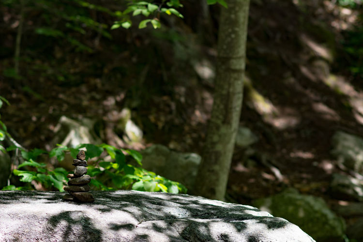 Beauty In Nature Close-up Day Focus On Foreground Forest Glendale Falls Growth Middlefield, MA Nature No People Outdoors Tree Tree Trunk