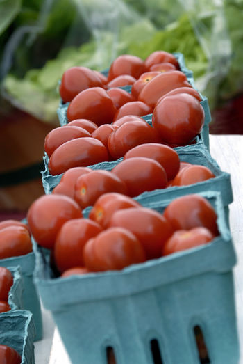Hydroponically grown ripe tomatoes. Agriculture Fresh Produce Produce Market Abundance Close-up Day Farmer's Market Food Food And Drink Freshness Healthy Eating Healthy Food Hydroponic Vegetables Large Group Of Objects No People Outdoors Produce Ripe Ripe Tomatoes Roadside Food Stall Tomato Vegetable