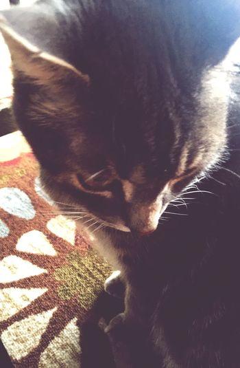 Sunshine Sun Soakingupthesun Animal Cat Cat Lovers Feline Michigan United States