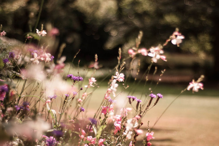 Soft toned Flower Field Bohemian Dreamland France Lille Paris View Beauty In Nature Blossom Close-up Day Flower Fragility Freshness Growth Nature No People Outdoors Peaceful Relax Spring Springtime Summer Vibe