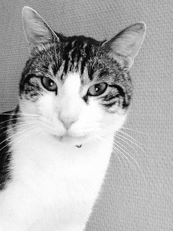 Chat Amour ❤ Cats Enjoying Life Hello World
