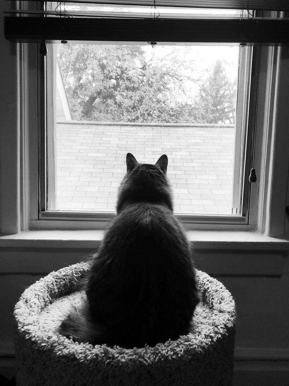 REAR VIEW OF CAT SITTING ON WINDOW