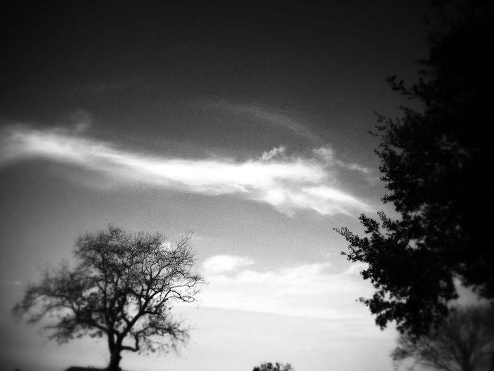 Black & White Stormy Sky, Tree First Eyeem Photo