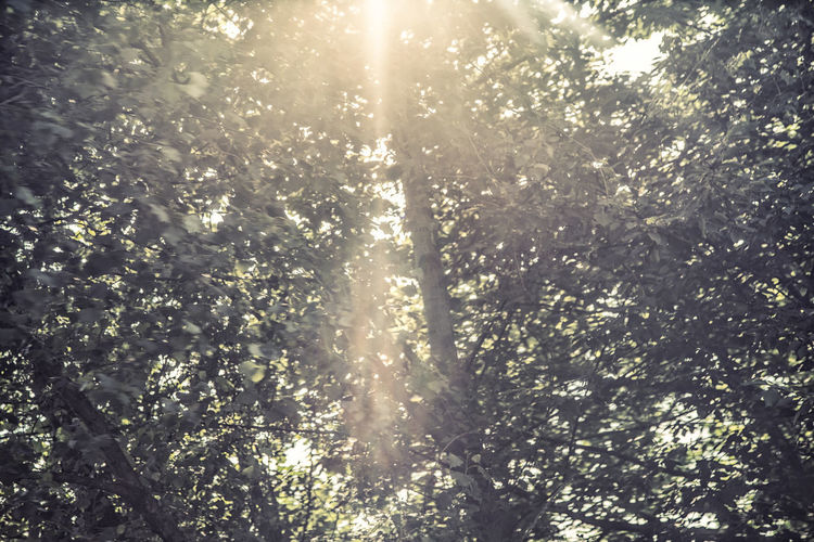 Beauty In Nature Bright Brightly Lit Day Forest Growth Land Lens Flare Low Angle View Nature No People Non-urban Scene Outdoors Plant Scenics - Nature Sky Solar Flare Streaming Sun Sunbeam Sunlight Sunny Tranquility Tree Tree Canopy