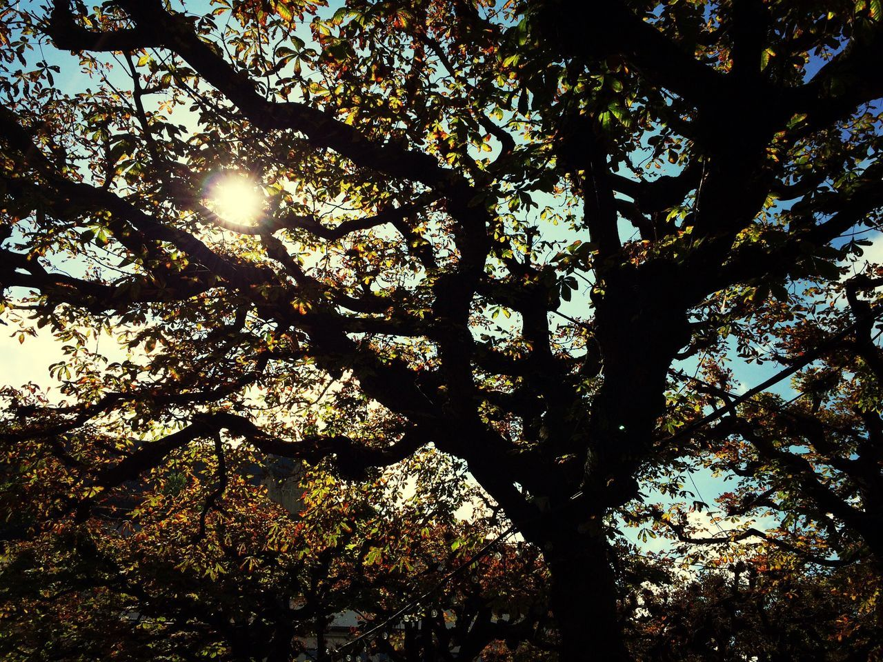 tree, nature, sunbeam, growth, sunlight, beauty in nature, sun, low angle view, branch, day, no people, outdoors, sunshine