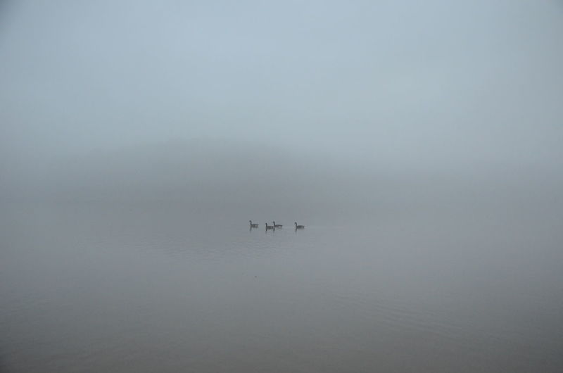 Water Fog Waterfront Beauty In Nature Tranquility Tranquil Scene Nature Sea Scenics - Nature Day Nautical Vessel Transportation Swimming Animal Themes Outdoors Unrecognizable Person Group Of Animals New Years Day 2019