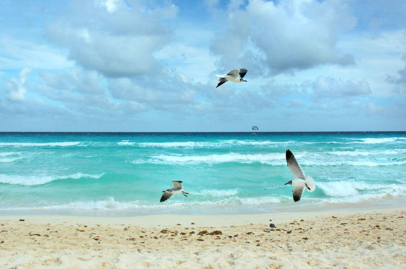 Beach Beauty In Nature Bird Cloud Cloud - Sky Day Colour Of Life Idyllic Motion Nature No People Original Experiences Outdoors Scenics Sea Sea Bird Seagull Shore Sky Spread Wings Tranquil Scene Tranquility Water Feel The Journey Fine Art Photography