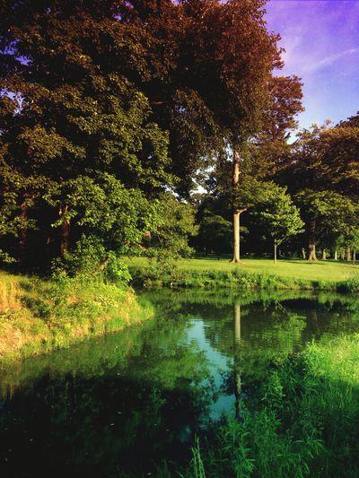 Summer Evening Reflection Mextures