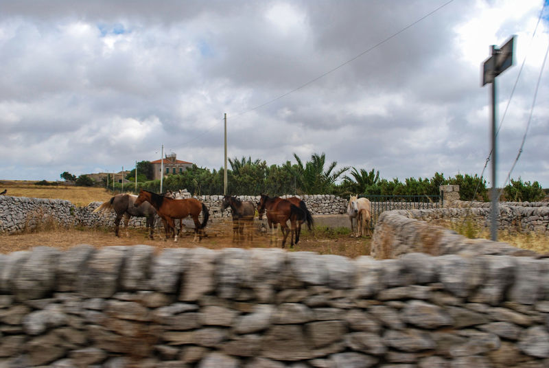 Animal Themes Cloud - Sky Clouds Countryside Day Domestic Animals Dry Field Horse Inspector Livestock Mammal Montalbano Nature No People Outdoors Ragusa Road Sicily Sky Stones Togetherness Tree Typical Walls EyeEmNewHere