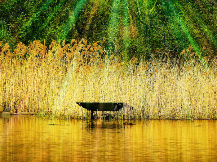 One Animal Animal Themes Animal Plant Water Mammal Lake Waterfront No People Tranquility Beauty In Nature Animal Wildlife Reflection Grass Tree Day Vertebrate Nature Tranquil Scene Outdoors
