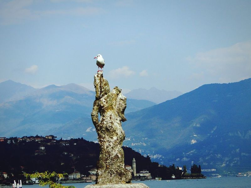 Mountain Mountain Range Day Outdoors Tail No People Seagull Lake View OpenEdit Italy🇮🇹 Lakecomo Nature Naturelovers Birds🐦⛅ Nature_collection Nature Photography Europe