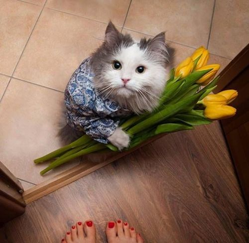 Pets Indoors  Domestic Animals One Animal Animal Themes Domestic Cat Mammal High Angle View Home Interior Cat Portrait Looking At Camera Full Length Feline Whisker Softness No People At Home Kitten Freshness