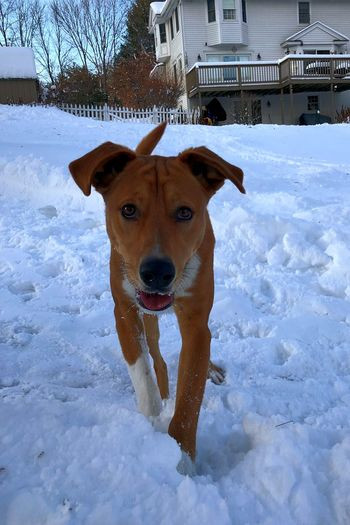 Dogs can be curious too Enjoy Backgroundblur IPhoneX Snow Winter Dog Cold Temperature Weather Pets Domestic Animals Outdoors Nature