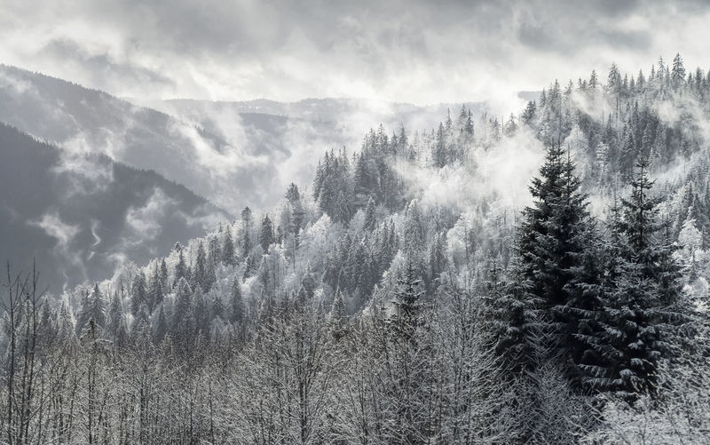 Black Forest winter panorama Black Forest Germany Winter Snow Mist Fog Evergreen Evergreen Tree Plant Tree Tranquil Scene Tranquility Scenics - Nature Beauty In Nature Cloud - Sky Environment Pine Tree Nature Sky WoodLand Pine Woodland Outdoors Mountain No People