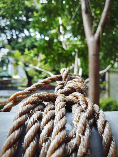 Close-up of rope tied on railing against