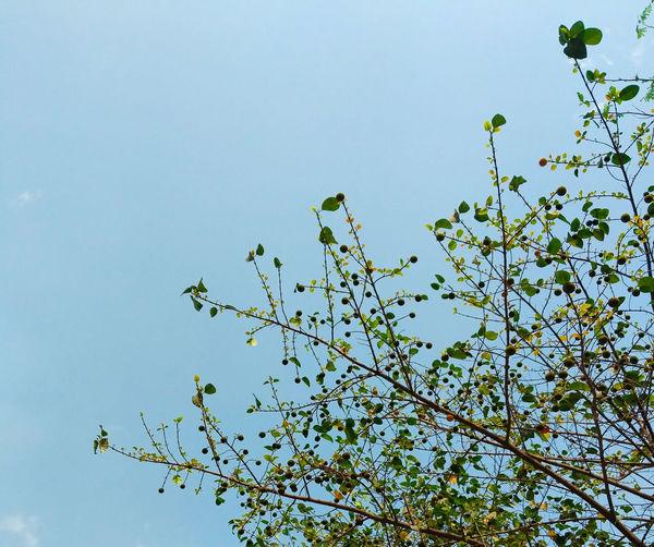 Minimalism Green Tree Sky Blue Bird Flying Tree Branch Flower Clear Sky Flock Of Birds Sky Animal Themes
