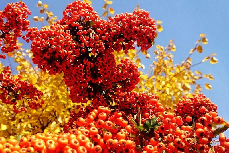 Autumn Colors Beeris Color Explosion Hintergrundgestaltung Colors Colors Of Autumn