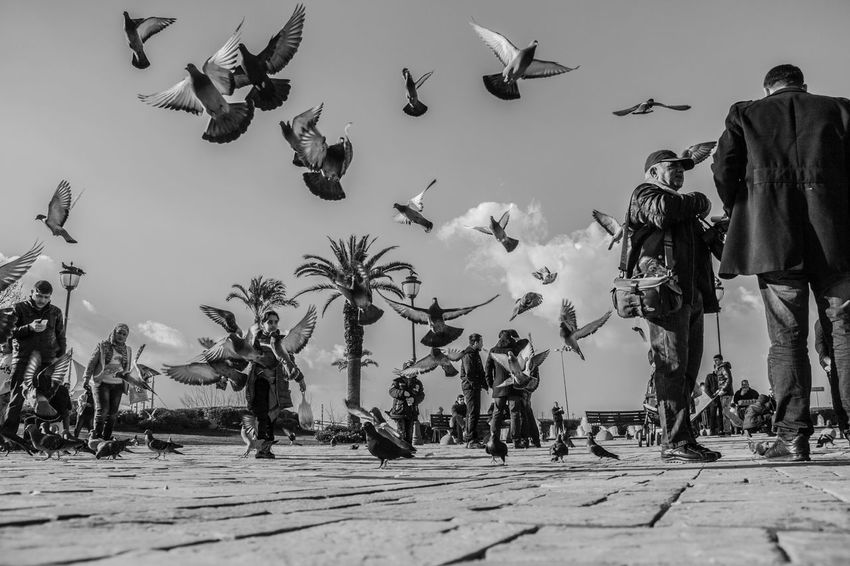 Konak Izmir Turkey Türkiye Turkishfollowers Turkish Eyem Best Shots Eyemphotography Eyem Nature Lovers  Eyem Gallery Eyem Best Shots Nature_collection Eye4photography  EyeEm Best Edits Blackandwhite Black & White Eye4black&white