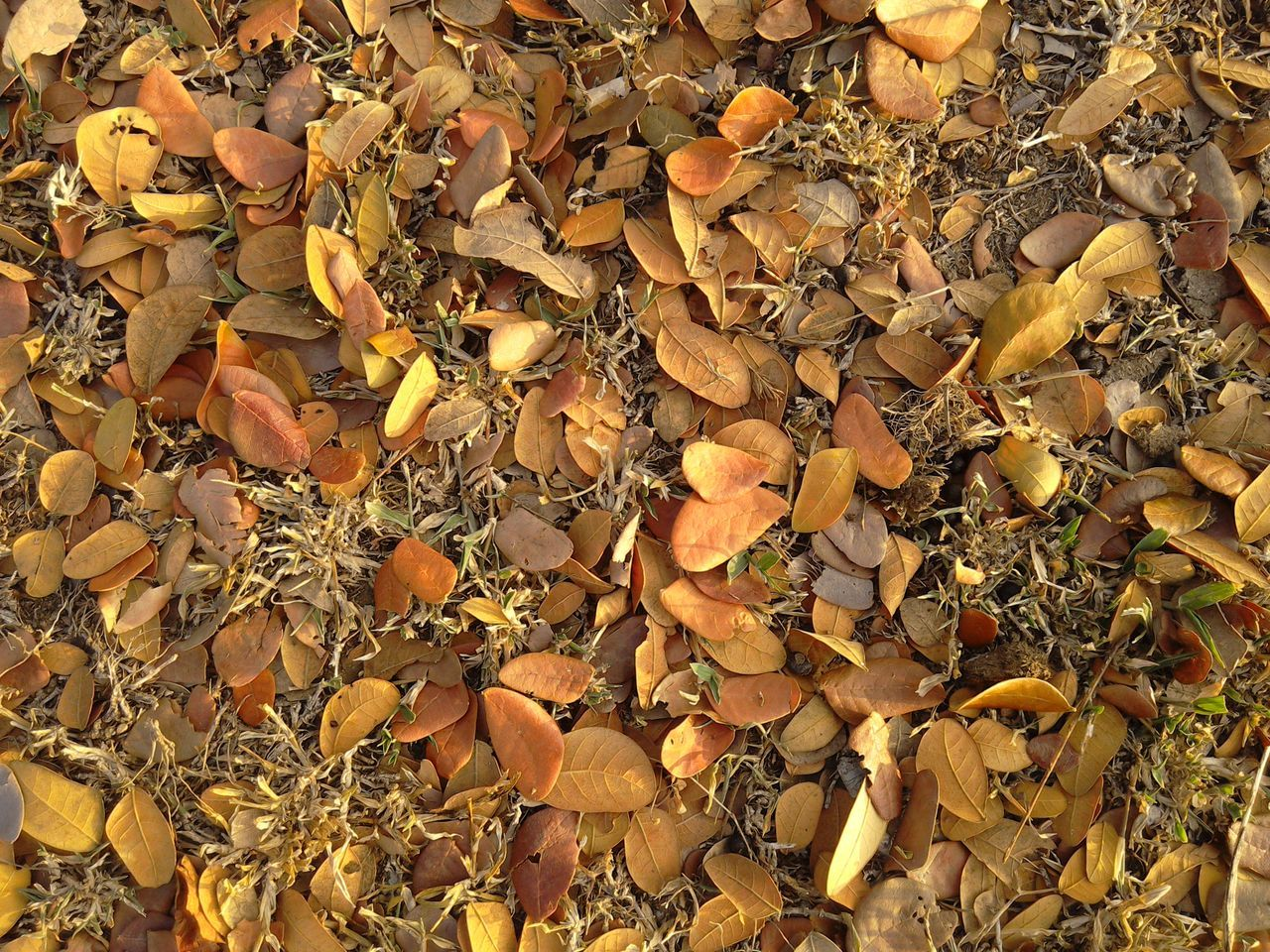 Directly Above View Of Fallen Dry Leaves