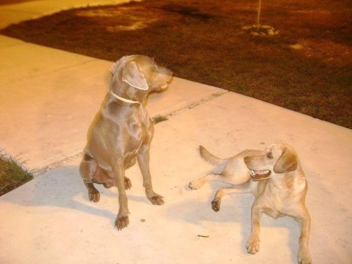 Dogs <3  Bruno & Frida. :)