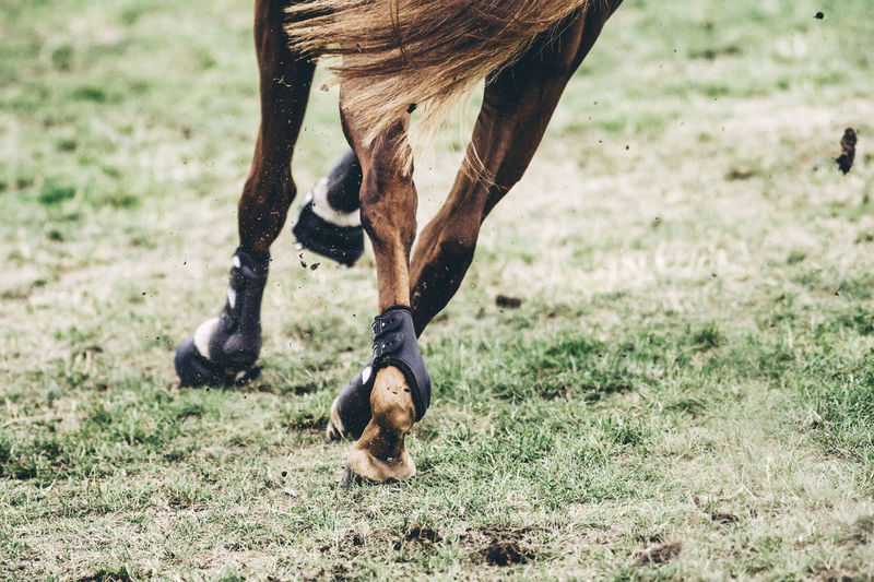 Low section of horse running on field