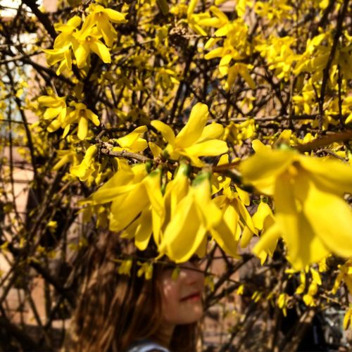 Urban Spring Fever Brooklyn Park Slope Spring Yellow Yellow Flower